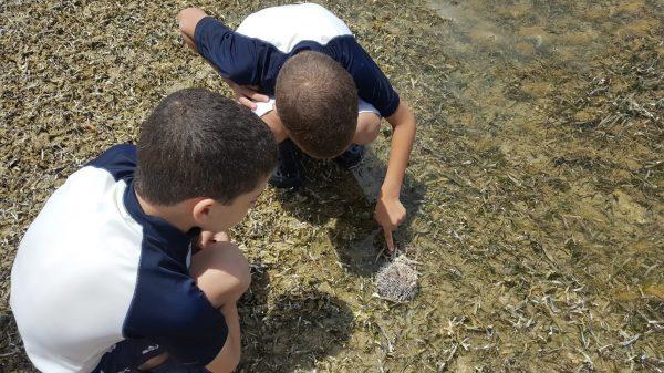 Descubriendo la vida marina en vivo y en su hábitat.